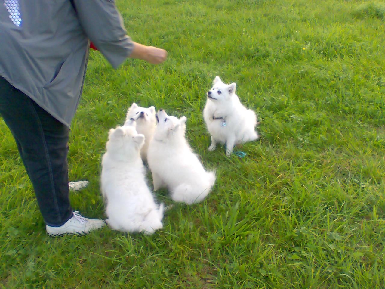 und sitz !!! Quiana und iher 3 Zwerge, Ami, Bailey und Avaro