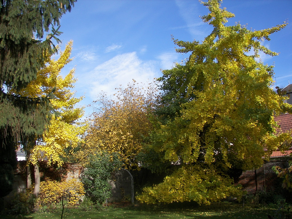 Jardin chambresdhotes meru oise for Le jardin clos