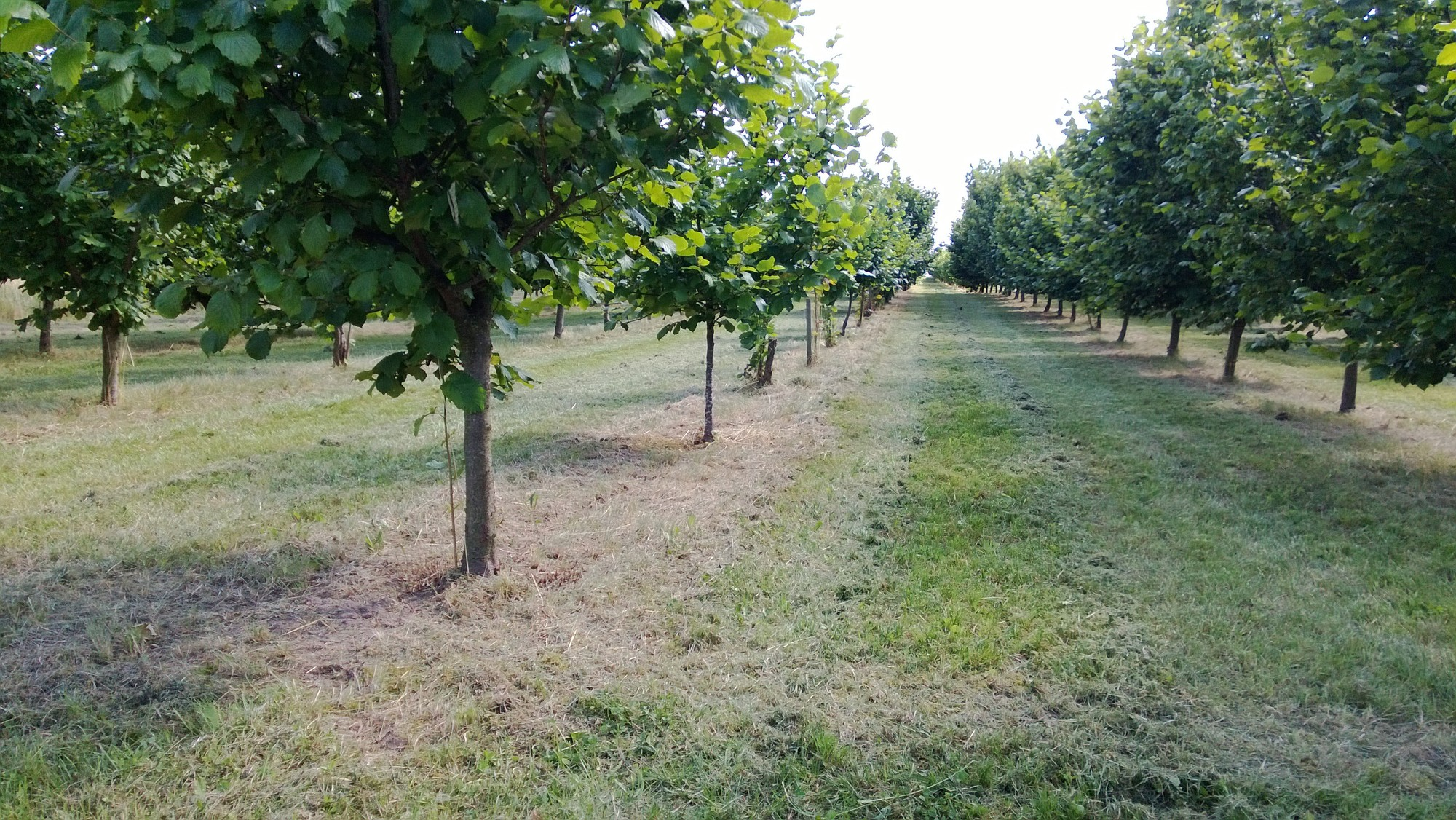 bio walnüsse lieferant