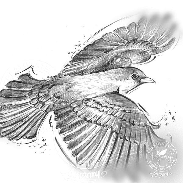 Vogel Taecha gezeichnet mit Bleistift