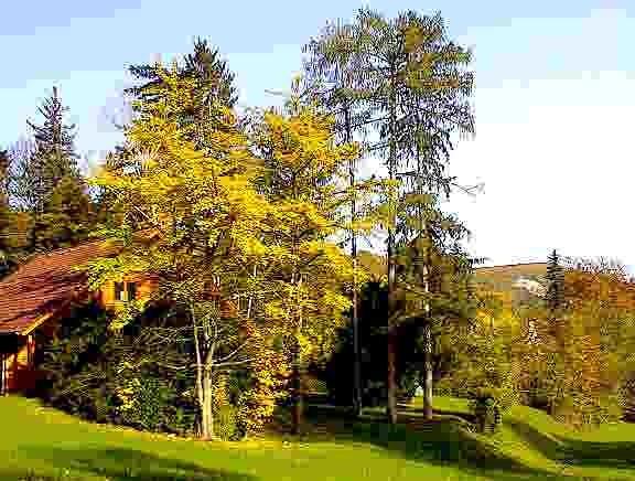 Unser Park im Herbst