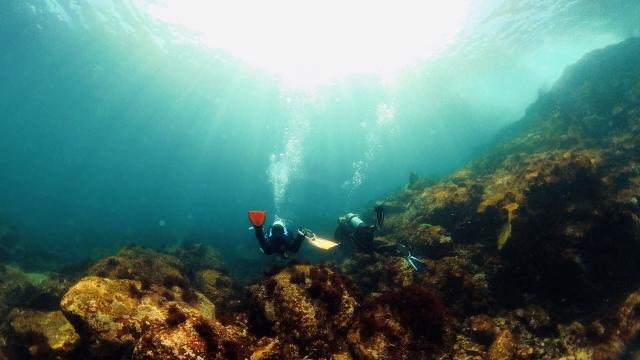 伊豆海洋公園のダイビング