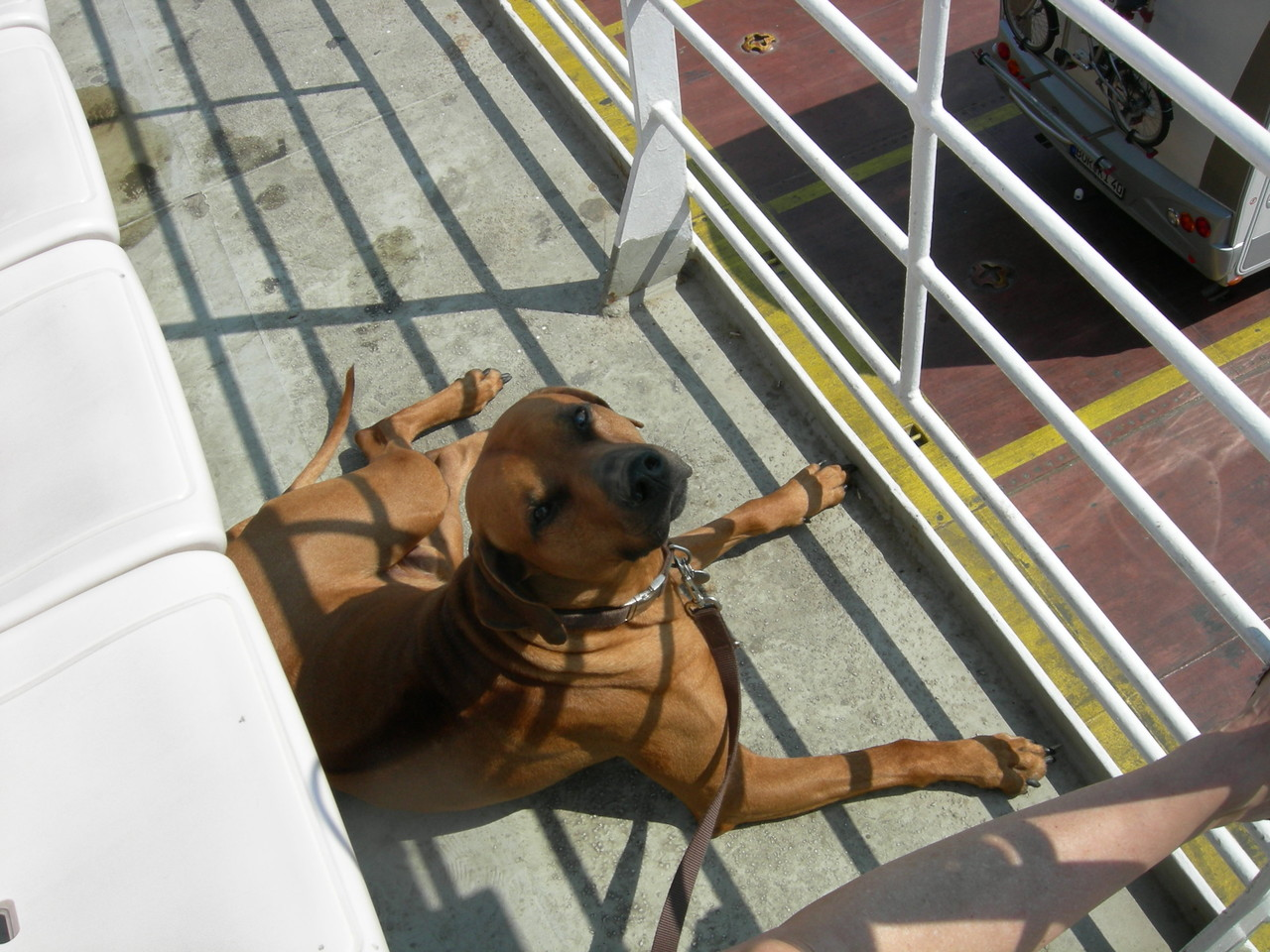 Benji an Bord Überfahrt 2013