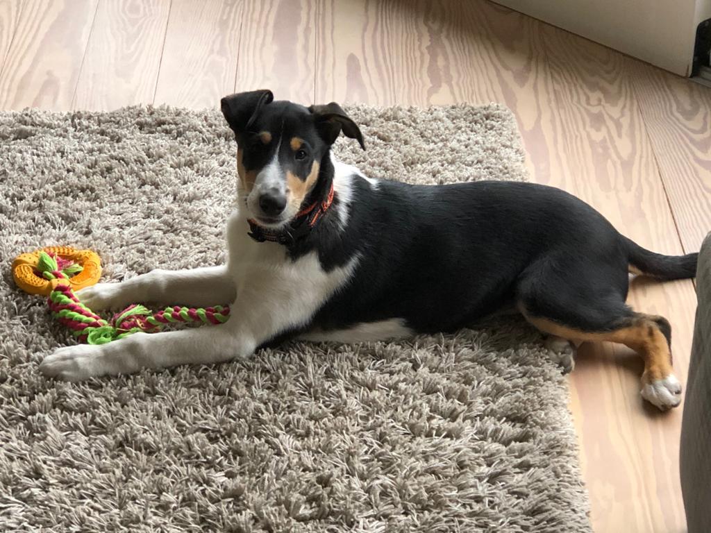 Kylo mit 5 Monaten
