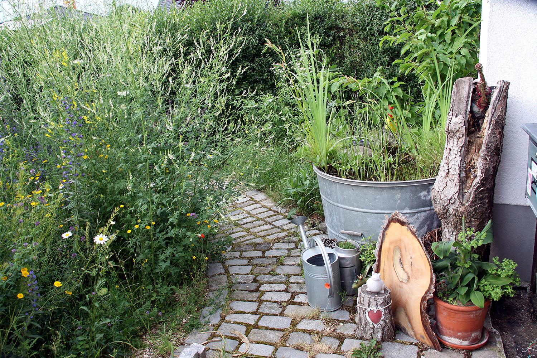 Vorgarten mit Wildblumen in der Steinkleeblüte