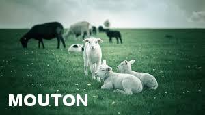 Enclos pour mouton le moins cher