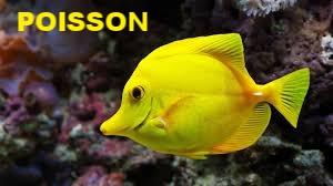 Néon LED pour aquarium meilleur tarif