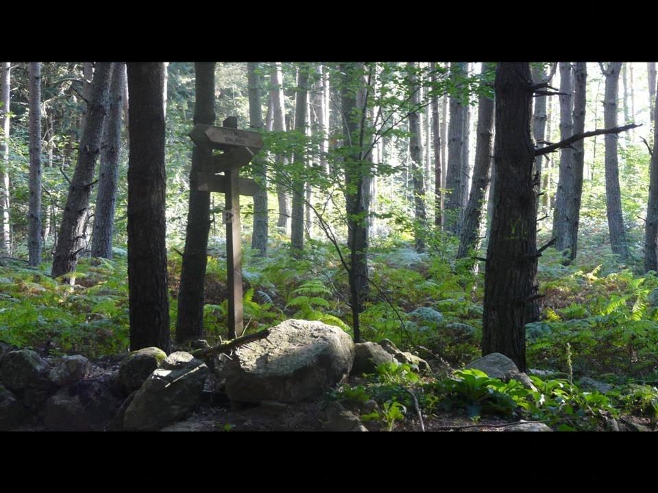 Croisée des Chemins forestiers ; Monts de la Madeleine
