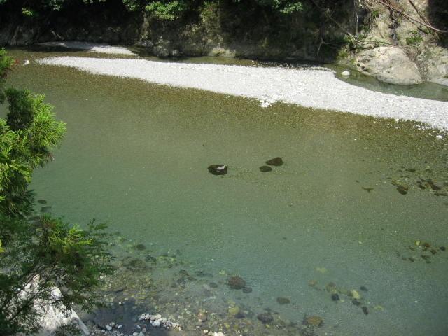 橋の上からアユの泳いでいるのが見れます。