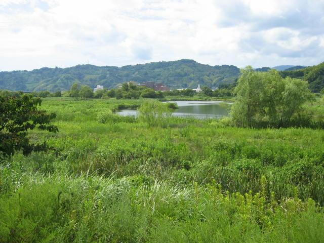 静岡の麻機にある沼地で小さな池が点在していて小鮒やタナゴなどが釣れるポイントです。