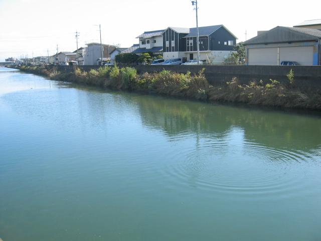 2019-11月20日の裏の巴川、鵜やカモなどの鳥が子魚を探しています。