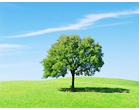 緑の草原にはえる一本の木