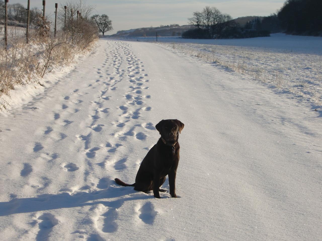 Noch mal Schnee....