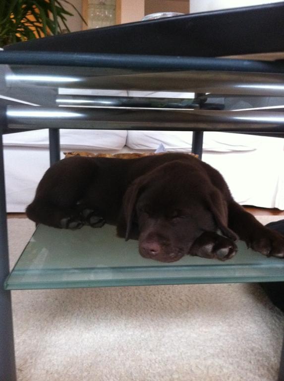 Balus Lieblingsplatz unter dem Tisch