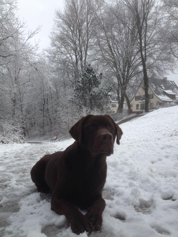Balu im Schnee