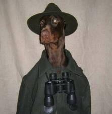 Großer Jägerhund