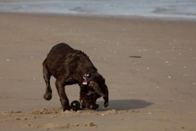 Strandspieler Beefheart