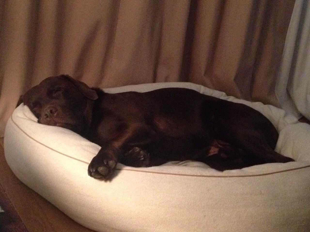 Bootsmann ist erschöpft.....