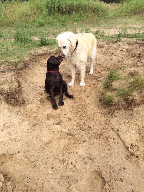 Auch Lola hat schon einen Hundefreund gefunden