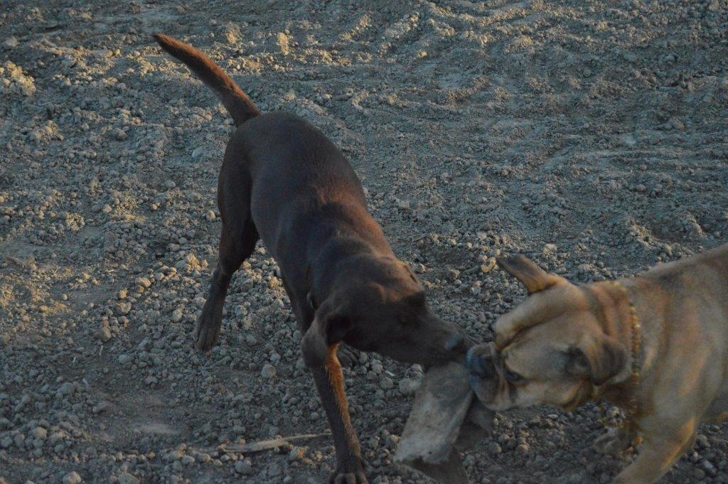 Mit Hundefreundin