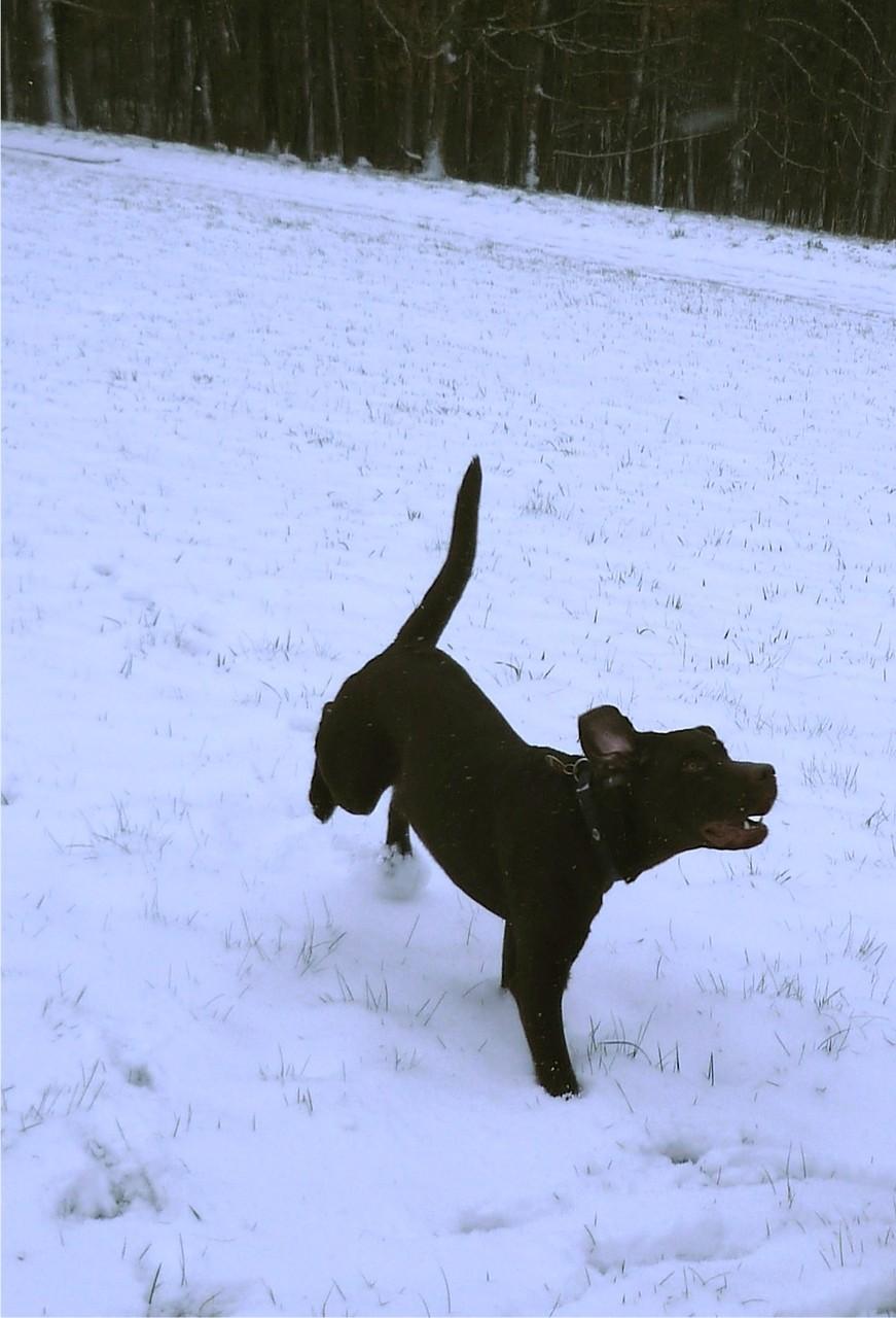 Bhima´s erster Schnee im Siegerland
