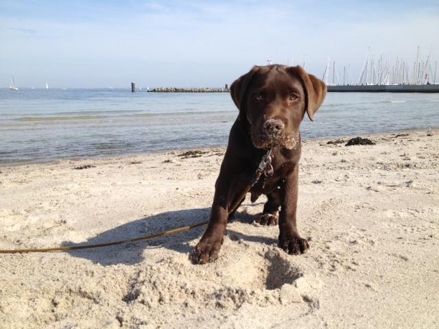 Ahoi Bootsmann im Urlaub