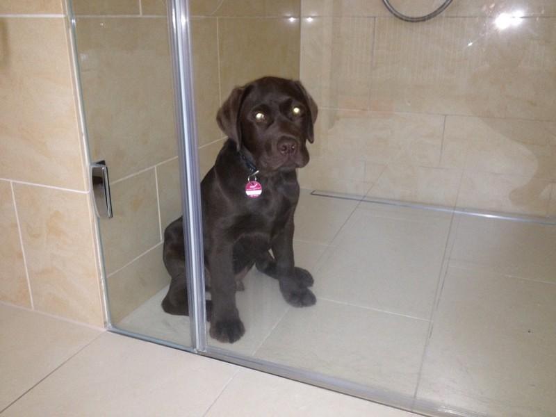 Dumm gelaufen und selbst in der Dusche eingesperrt.....