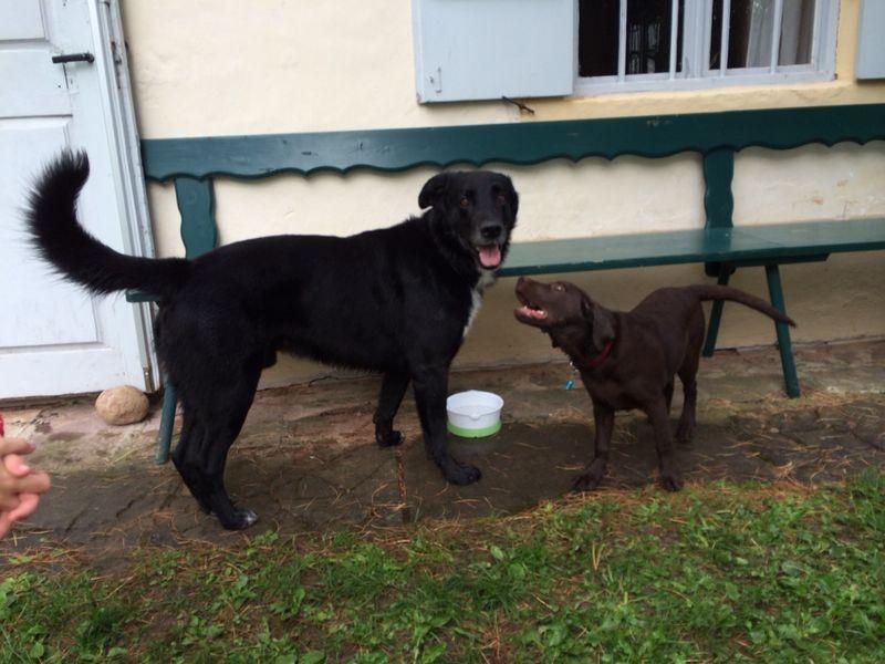 Lucy mit dem Kopfverdreher und Freund Eros !
