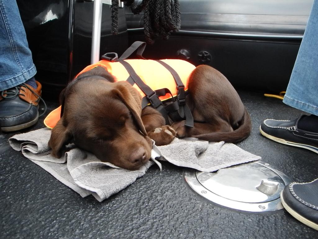 Auch bei voller Fahrt muss ein Welpe schlafen....