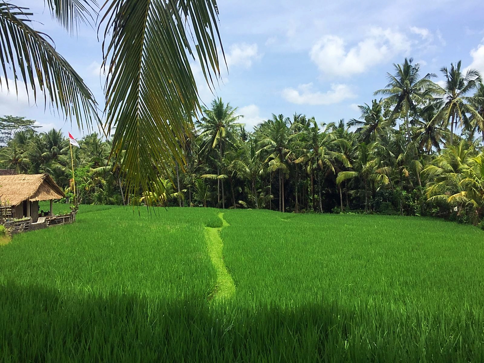 Campuhan Ridge Walk: Reisfelder inmitten von Ubud