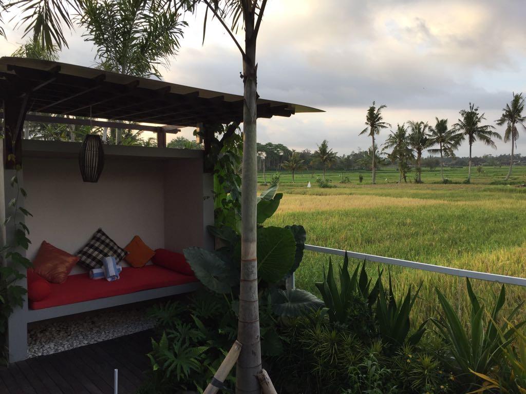 Die Aussicht auf das benachbarte Reisfeld