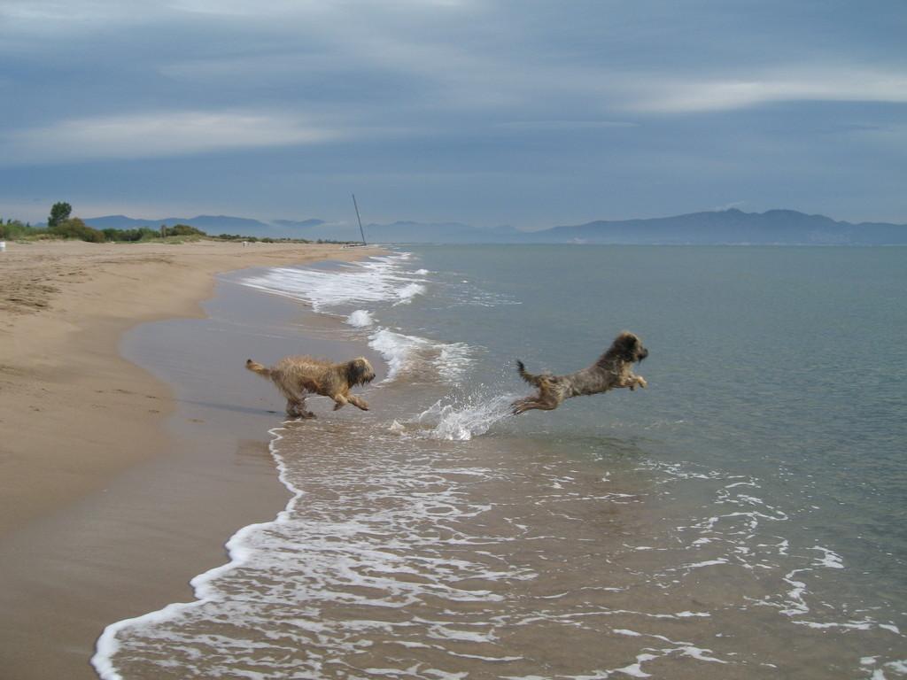 ...über den Wellen muss die Freiheit wohl grenzenlos sein