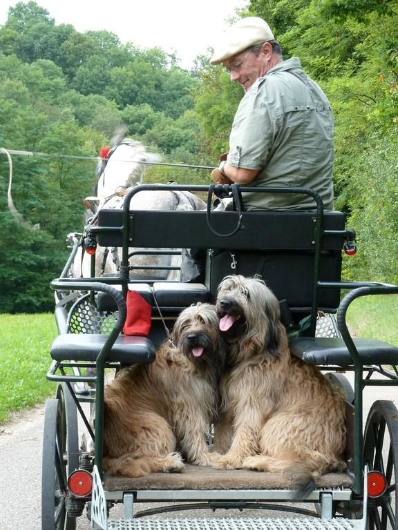 Ben und Scarlet mit Rudi auf der Kutsche