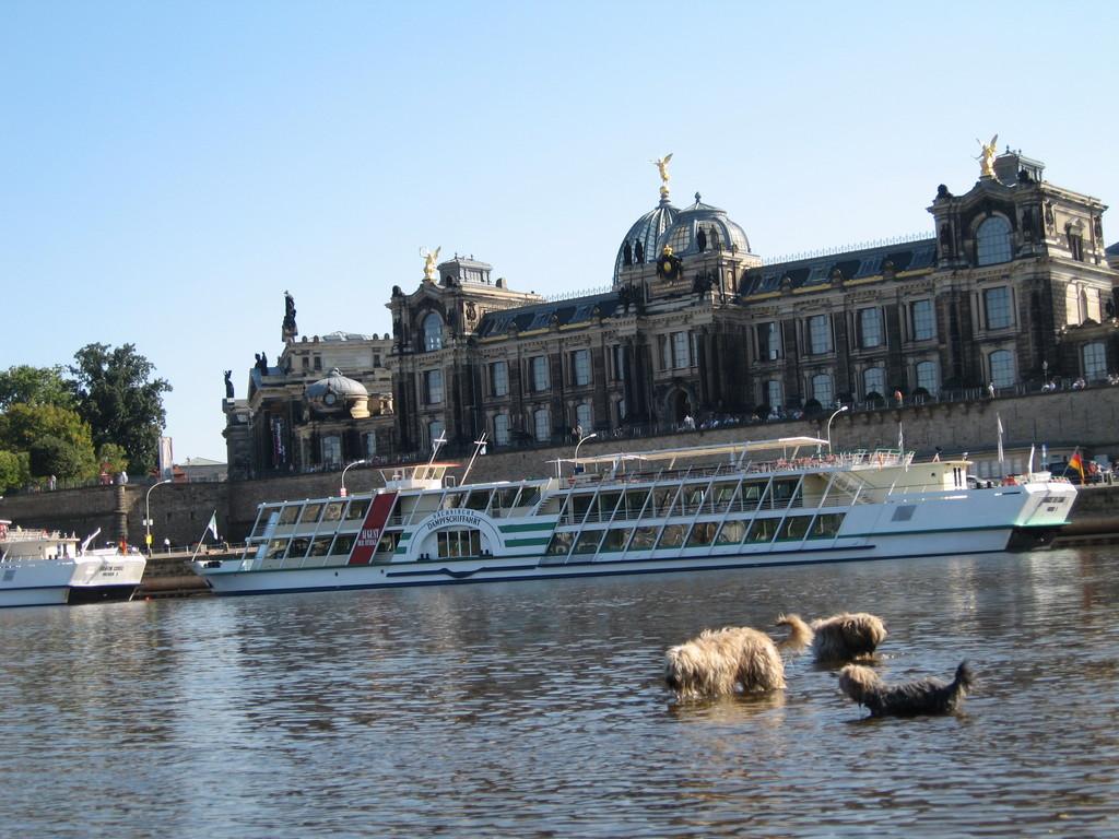 ein Bad in der Elbe mit Blick auf Dresden