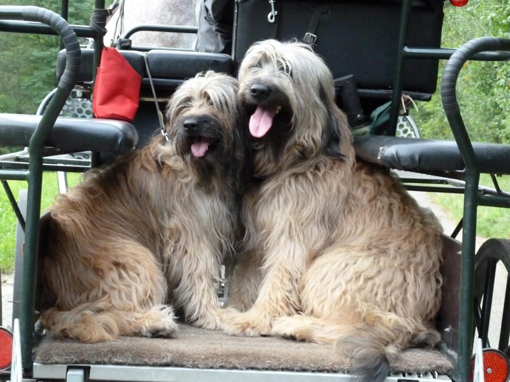 Scarlet und Ben auf Hochzeitsreise