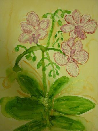 Meine Orchide`, Juli 2012