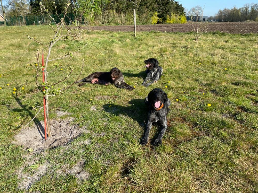 Die 3 Mütter Assy, Olanda und Luzie nach dem täglichen Revier-Ausflug (9.4.20). Die Welpen sind jetzt 2-4 Wochen.