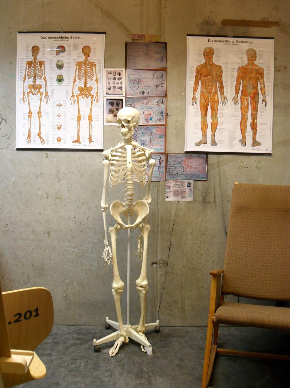 """""""Bammes leicht gemacht""""- aus meiner Lehrtätigkeit in Künstleranatomie an der Hochschule für Gestaltung in Wismar"""