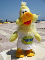 Maskotchen Tauchschule Ducks Safaga
