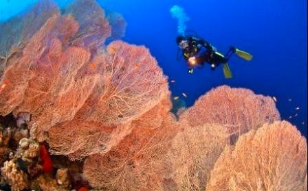 Riesengorgonien, Dropp Off, Steilwand, Korallengarten, Strömungstauchgänge, Safaga