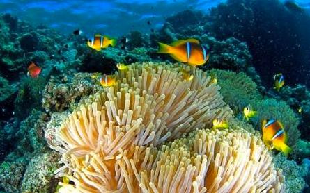 Anemonen, Anemon-City, Panorama Reef, Steilwände, Plateaus, Safaga