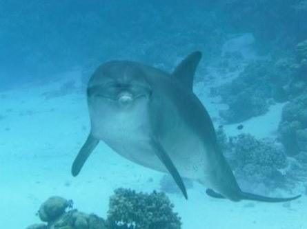 Delphine, große Sandflächen, Safaga, Hafennähe