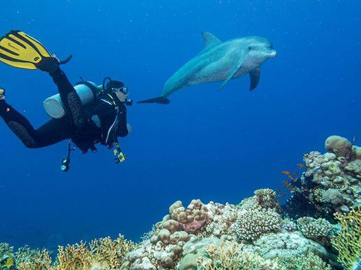 Delfine in Safaga