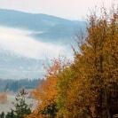ein Busch und im Hintergrund Berge