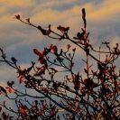 rote Blätter vor Abendhimmel