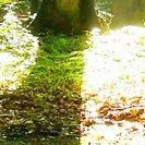 Waldboden im Buchenwald