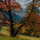 ein Baum vor hellem Hintergrund