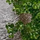 Gebüsch vor Wasser