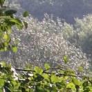 Sonnenlicht auf Büschen