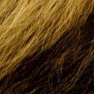 Löwenmähne